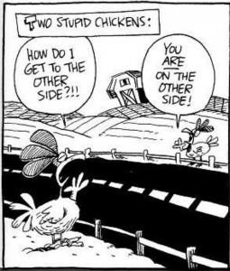 stupid chicken joke